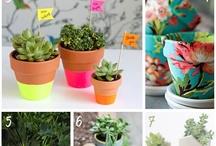 Kaktuszok és virágok