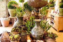 Flower shop...Florist