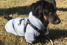 Dachshund clothes / Clothes for dachshunds, chihuahuas and small breed dogs
