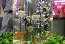 Paludarium Vivarium Terrarium Aquarium