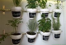 Plantas medicinales y aromaticas