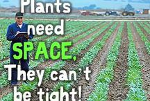 teaching plants