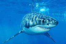 Sharky Stuff
