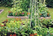 Herbs and herb gardens