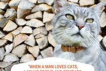 Cat Quotes / A Pettsie collection of cat and kitten quotes