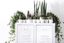 Flowers, Plants & Florigraphy