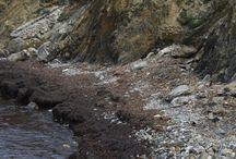 Baubeach Cabianca pulita / Firmiamo la petizione affinché il Comune pulisca regolarmente la spiaggia per cani Cabianca ad Antignano