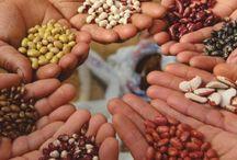 biodiversità / Biodiversità: ricchezza della natura