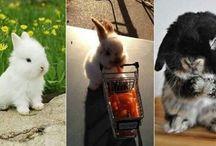 Kaninchen/ Hasen<3
