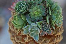 succulent / by Zsan007