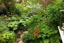 B&B Shade Garden / by Cathe McRae