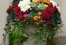 Fall Planters / Some great Fall planter ideas!