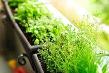 Herbs and gardening / Fun ways to garden.... / by Stephanie Bradshaw