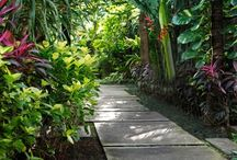 Native Garden / Native garden inspiration!