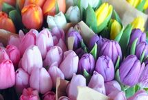 Flowers / Roses are red, violets are blue and I love tulips.