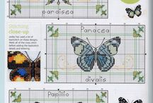 papillons pdc