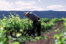 Vins Premium / Sélection de vins bios, de vins de  garage, de vins Premium crianza, fabriqués à partir de vieilles vignes et en respectant l'environnement. Vins d'auteur, de grande qualité, uniques,des variétés: Tempranillo, Garnacha, Viura, Graciano, Maturana, ...