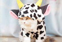cats costume