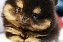 roztomily drobeček