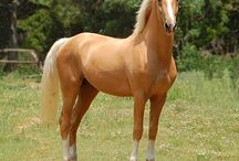 future horse