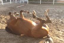 Horse, my love.