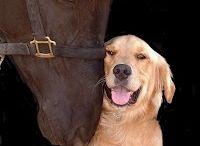 DOG & ANIMALS / Köpekler Hk. Resimler