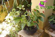 Colección Verano / Plantas de Ornato y Exterior Verano 2014