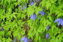 My Garden / Flowers - perennials and annuals in my garden