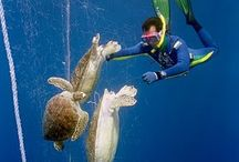 Save our oceans! / This board is reserved for images which promotes awareness about keeping our ocean healthy!