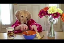 Funny Dog Videos / Dog videos that make us laugh and smile!