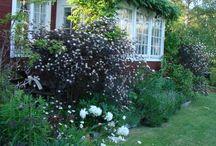 Trädgård och utomhus