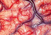 Neurology / by Savanna Melkus