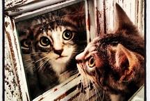 Animals / by Michelle Phillips