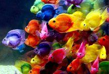 de mooiste papegaaien / kleurrijke papegaaien