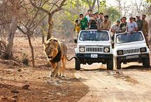 Gir  Forest National Park GUJARAT    INDIA