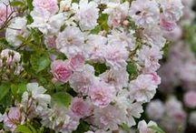 Flowers - for My Garden