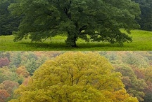 árbores / by Carmen Argüello