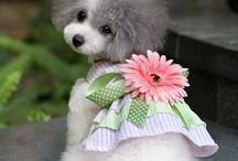 Cute dogs dress up