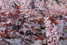 Heuchera a barevné rostliny