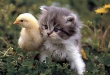 kittens / by Armida Hudec
