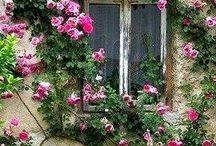 Kwiaty,ogrody