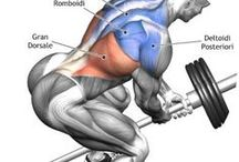 entrenamiento por musculos