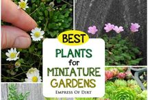 Inspiration: Fairy Gardens / Creating Fairy Gardens and Miniature Gardens in Pots, for the Balcony or as Hidden Places in the Garden.