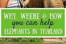 HOT Thailand / Everything that makes Thailand a hot travel destination