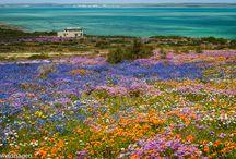 Namaqualand. Noord Kaap