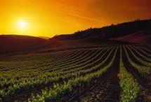 Napa Valley / Napa Valley/Cabernet Sauvignon