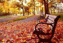 Autumn / Magico, dall'aria frizzante...si intrufola dalla finestra e porta un po' di scompiglio