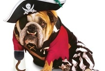 Dress Up / Funny ways we torture our pets with costumes & dress up
