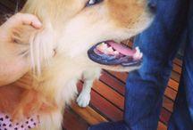 Cachorros ❤