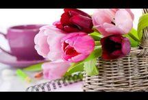 Virág videók